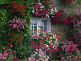 Farmhouse Window Surrounded by Flowers  Ille-et-Vilaine  Brittany  France  Europe