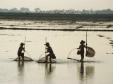 Silhouettes of Three Fishermen in Flooded Fields in Vietnam  Indochina  Southeast Asia