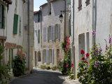 Hollyhocks Lining a Street  La Flotte  Ile De Re  Charente-Maritime  France  Europe