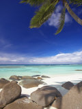 Rocks and Palm Tree on Tropical Beach  Seychelles  Indian Ocean  Africa