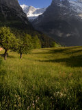 Meadows and Mountains  Grindelwald  Bern  Switzerland  Europe
