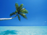 Palm Tree Overhanging the Sea  Male Atoll  Maldives  Indian Ocean