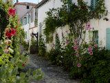 Hollyhocks Lining a Street with a Well  La Flotte  Ile De Re  Charente-Maritime  France  Europe