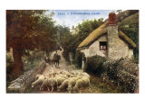 A Devonshire lane with cottage and sheep