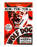 The Wolf Dog  Rin Tin Tin Jr  1933