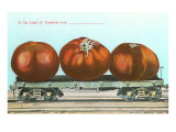 Giant Tomatoes on Flatbed