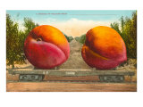 Giant Peaches on Flatbed
