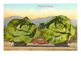 Giant Cabbages on Flatbed