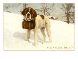 St Bernard with Keg in Snow  Sun Valley  Idaho