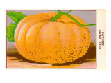 French Pumpkin Seed Packet