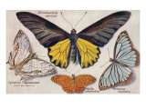 Varieties of Butterflies