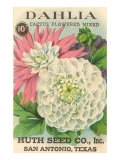 Dahlia Seed Packet