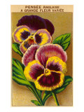 French Pansy Seed Packet