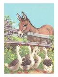 Burro Talking to Geese
