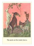 Goats Eat Tender Leaves