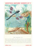 Epps's Nature Series  Dragon Fly