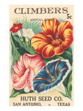 Mixed Climbers Seed Packet