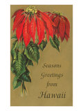 Season's Greetings from Hawaii  Poinsettias