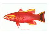 Hawaiian Fish  Uu