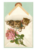 Kittens in Envelope with Rose