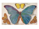 Varieties of Butterfly