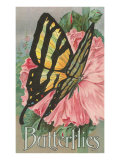 Yellow Swallowtail on Hollyhocks