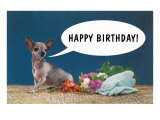 Happy Birthday from Chihuahua