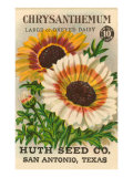 Chrysanthemum Seed Packet