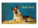 Thank You Quizzical German Shepherd