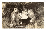 Gambling Squirrels