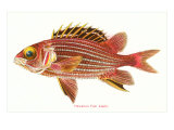 Hawaiian Fish  Alaihi