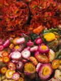 Flower market  Seafront Market  St-Paul  Reunion Island  France