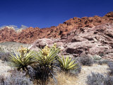 Red Rock Canyon National Conservation Area  Las Vegas  Nevada  USA