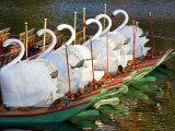 Swanboats  Public Garden  Boston  Massachusetts  USA