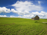 Spring Lentil Crop and Old Barn  Idaho  USA