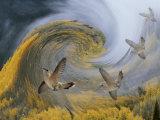 Abstract Simulation of Hummingbirds  Woodland Park  Colorado  USA