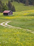 Alpine field with cabin  Bad Hindelang  Deutsche Alpenstrasse  Bayern-Bavaria  Germany
