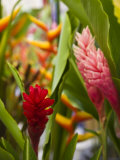 Red Ginger flowers  Seafront Market  St-Paul  Reunion Island  France