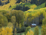 Log Cabin in Fall Colors  Dolores  San Juan National Forest  Colorado  USA