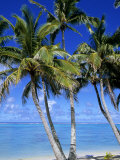 Palm Lined Beach  Cook Islands