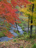 Coles Creek lined Autumn Maple Trees  Houghton  Michigan  USA