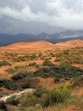 Storm at Coral Pink Sand Dunes State Park  Utah  USA