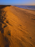 Dune at sunrise  Assateague Island National Seashore  Virginia  USA