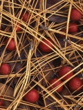 Ponderosa Pine needles and Hawthorn berries  Spokane County  Washington  USA