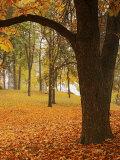 Autumn  Manito Park  Spokane  Washington  USA