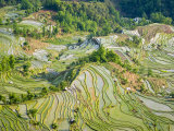 Flooded Laohu Zui Rice Terraces  Mengpin Village  Yuanyang County  Yunnan  China