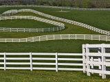 Fence Winding Across Calumet Horse Farm  Lexington  Kentucky  USA