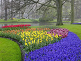 Pattern of Grape Hyacinth  Keukenhof Gardens  Lisse  Netherlands