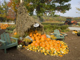 Gourds at the Moulton Farm farmstand in Meredith  New Hampshire  USA