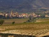 Village of Brinas surrounded by Vineyards  La Rioja Region  Spain
